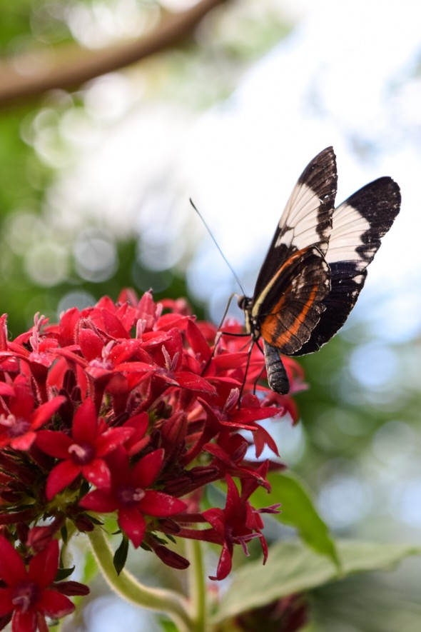 Butterfly | How to Build a Pollinator Garden