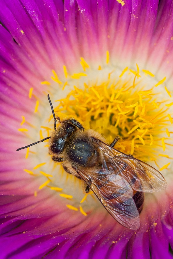 Bee | How to Build a Pollinator Garden