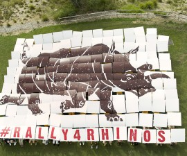 Almost 200 people—including San Diego Zoo Safari Park rhino keepers, high school conservation club members, San Diego Zoo Global staff members and Safari Park volunteers—celebrated World Rhino Day by taking part in a sky art project. The crowd assembled a 60- by 44-foot image depicting the Safari Park's beloved Nola, a 41-year-old northern white rhino, who is one of only four remaining in the world.  World Rhino Day is celebrated internationally on Sept. 22 each year, to raise awareness of the five species of rhinos in the world: black, white, greater one-horned, Sumatran and Javan. San Diego Zoo Global has been working for decades to help rhinos, which are facing the worst poaching crisis in history. An average of three rhinos a day are being killed in the wild. Rhinos are poached for their horns, which are made from keratin—the same material that forms human fingernails and hair.  San Diego Zoo Global has one of the most successful rhino breeding programs in the world. To date, there have been 93 southern white rhinos, 68 greater one-horned rhinos and 14 black rhinos born at the San Diego Zoo Safari Park.