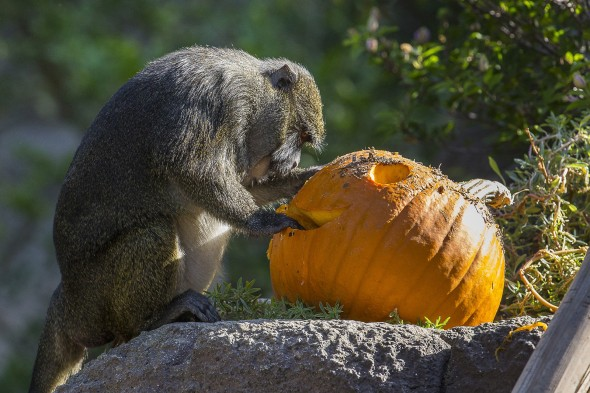 Animals Celebrating Pumpkin Season
