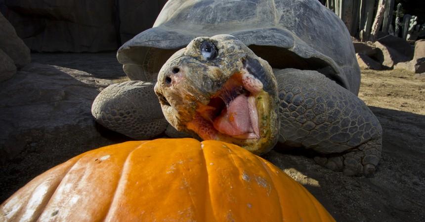 13 Animals Celebrating Pumpkin Season