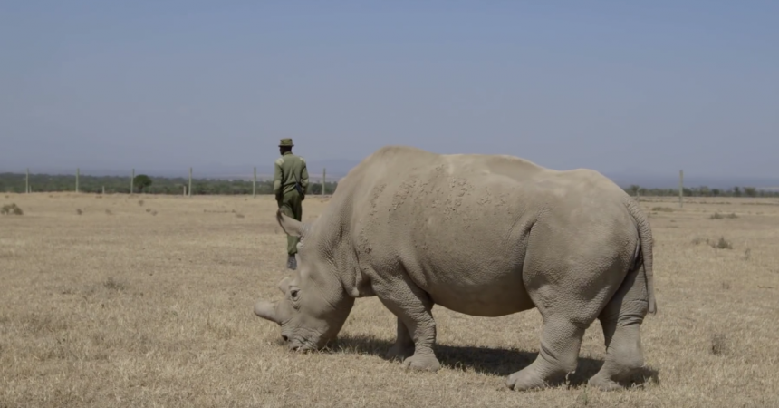 San Diego Zoo Safari Park Rhino Expert Visits Three of Earth's Four Remaining Northern White Rhinos in Kenya