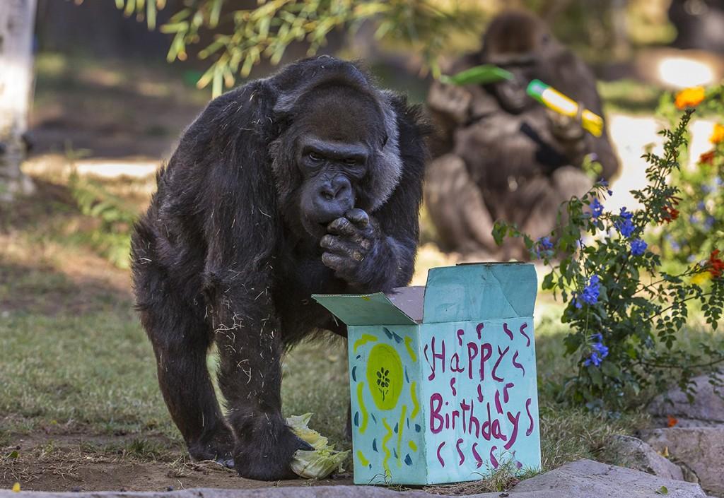 Vila enjoying birthday treats