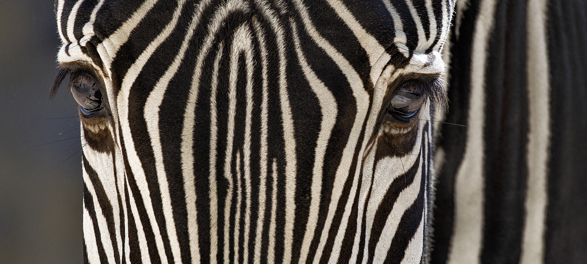 ZebraEnd