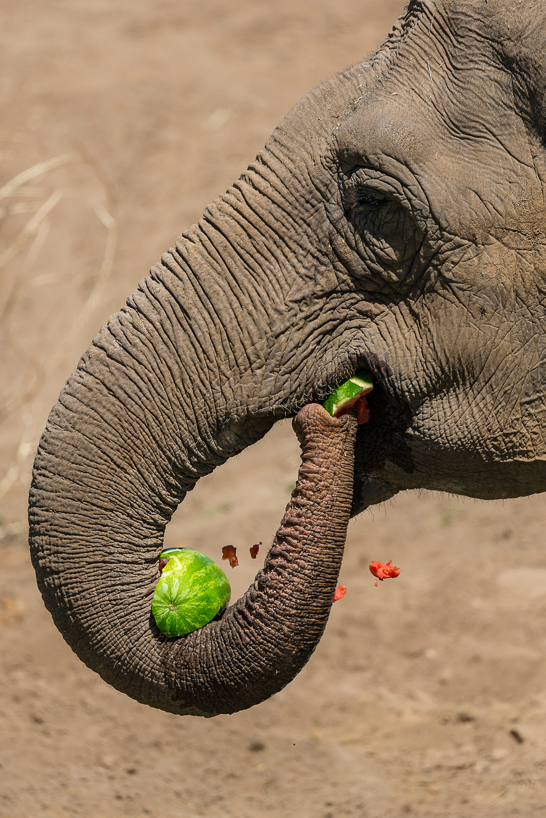 San Diego Zoo Celebrates 100th Birthday with a Party for Guests at Elephant Odyssey
