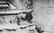 Centennial Throwback: Prince the Lion