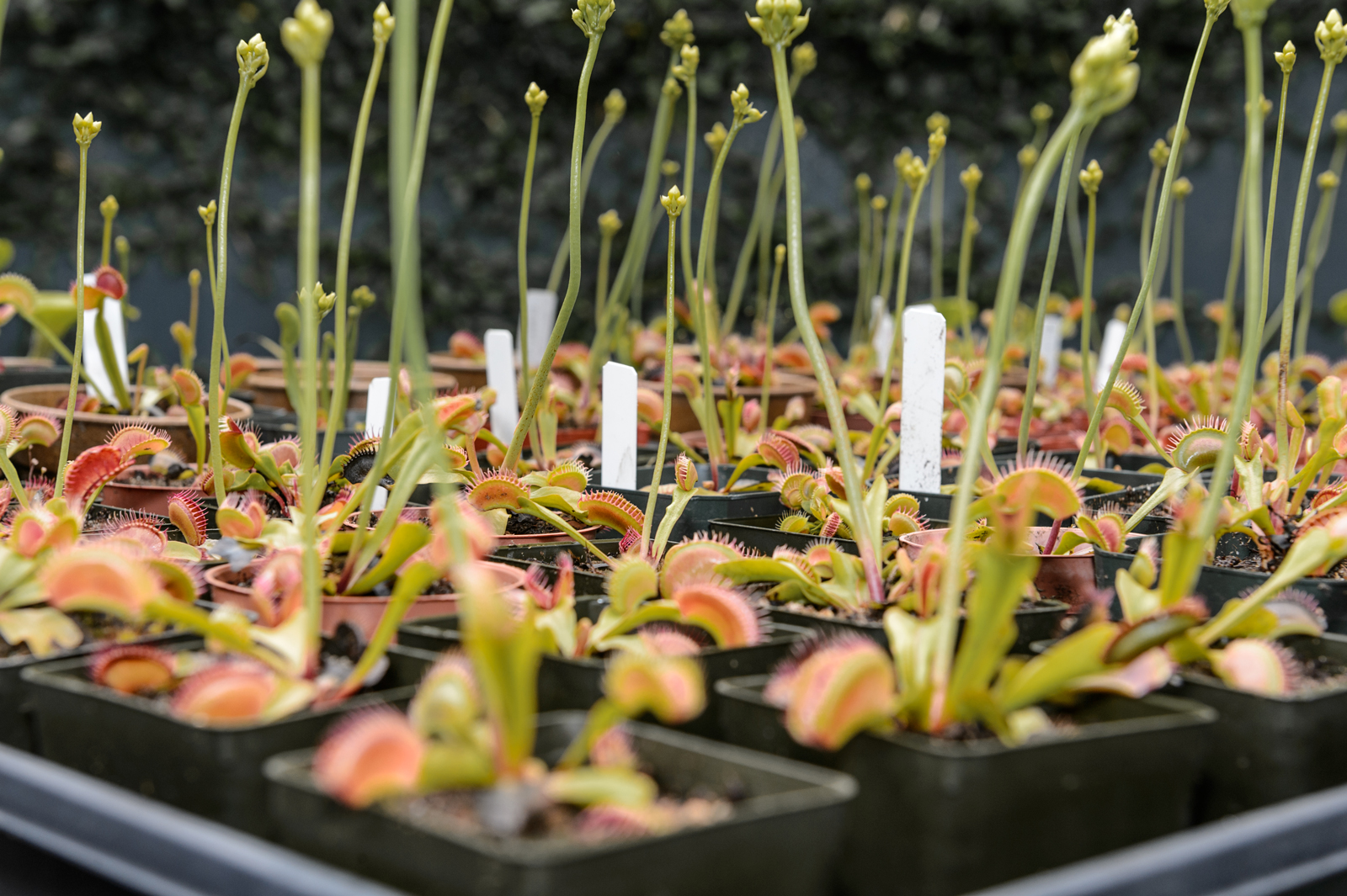 Fantastic Flesh-Eating Plants