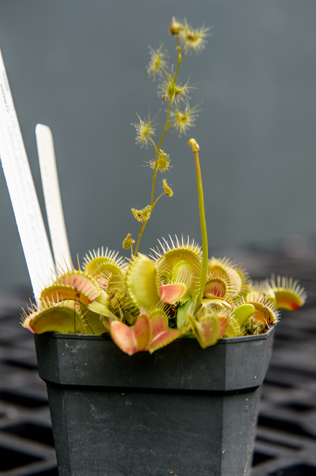 Fantastic Flesh-Eating Plants