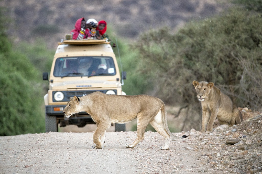 HEADER HERE Caption for image with truck and 2 lions