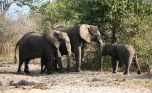 What the Loss of 144,000 African Elephants Really Means