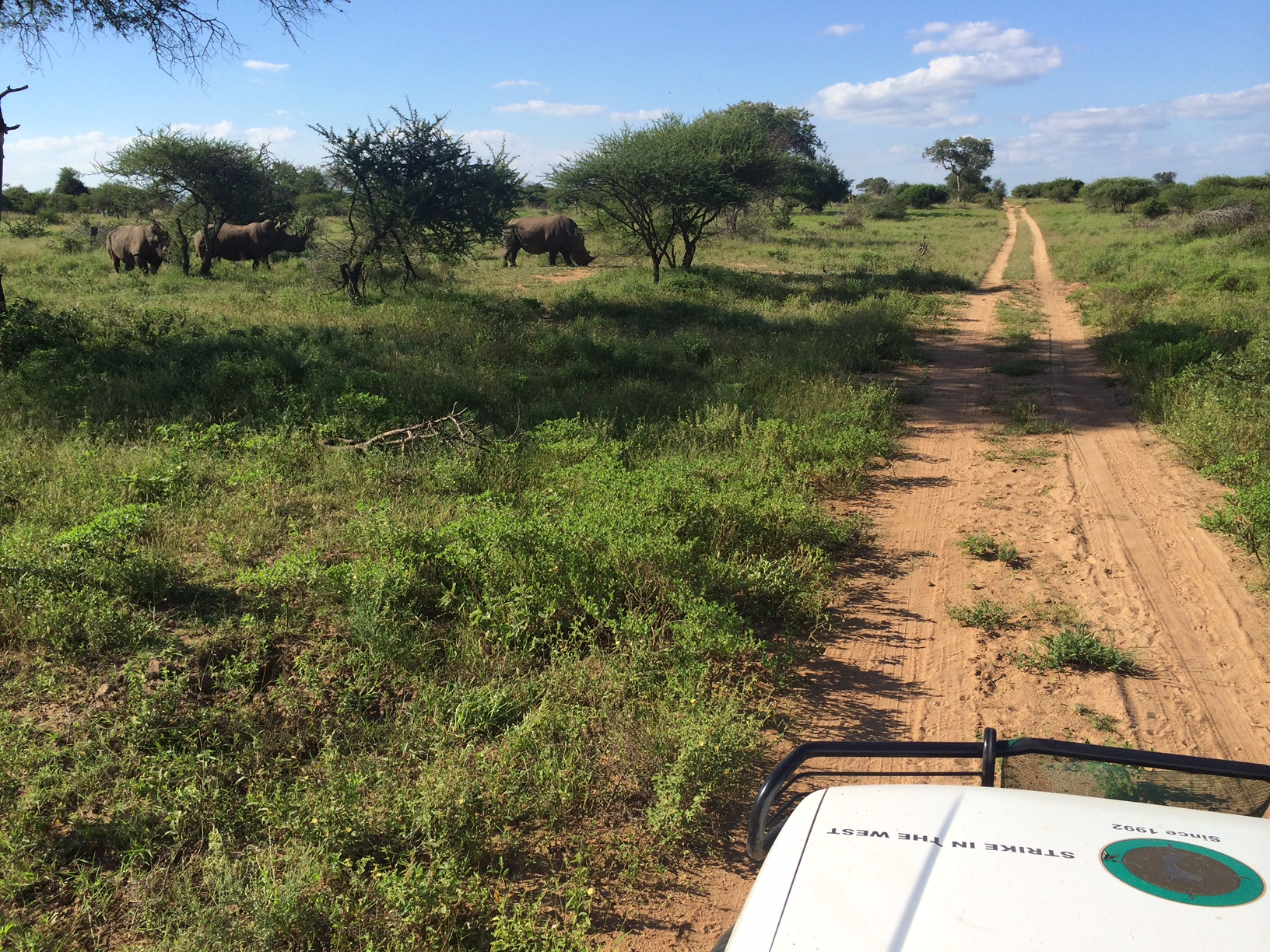 Checking up, while on patrol, on a group of rhinos who frequent a spot near a road.