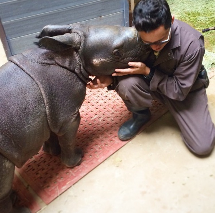 Mike sharing a moment with a hand-reared greater one-horned rhino calf at the San Diego Zoo Safari Park