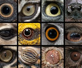 animal-eyes-copy