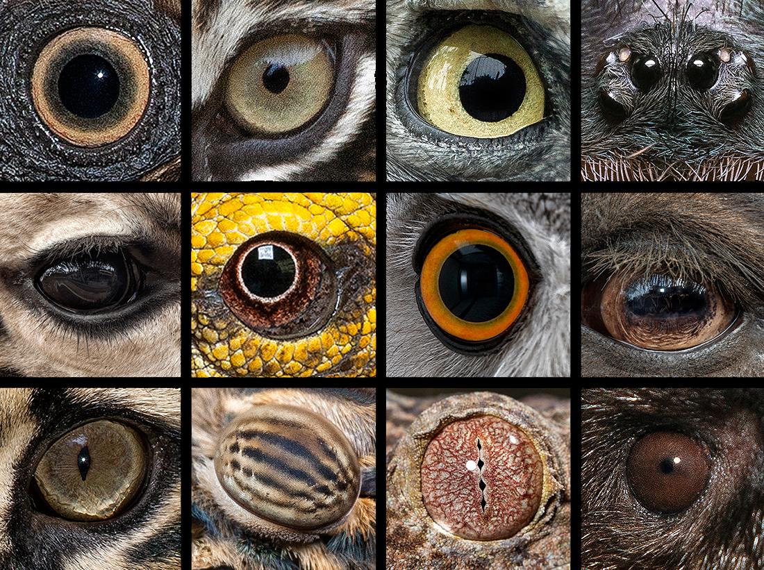 Eye Contact The Eyes