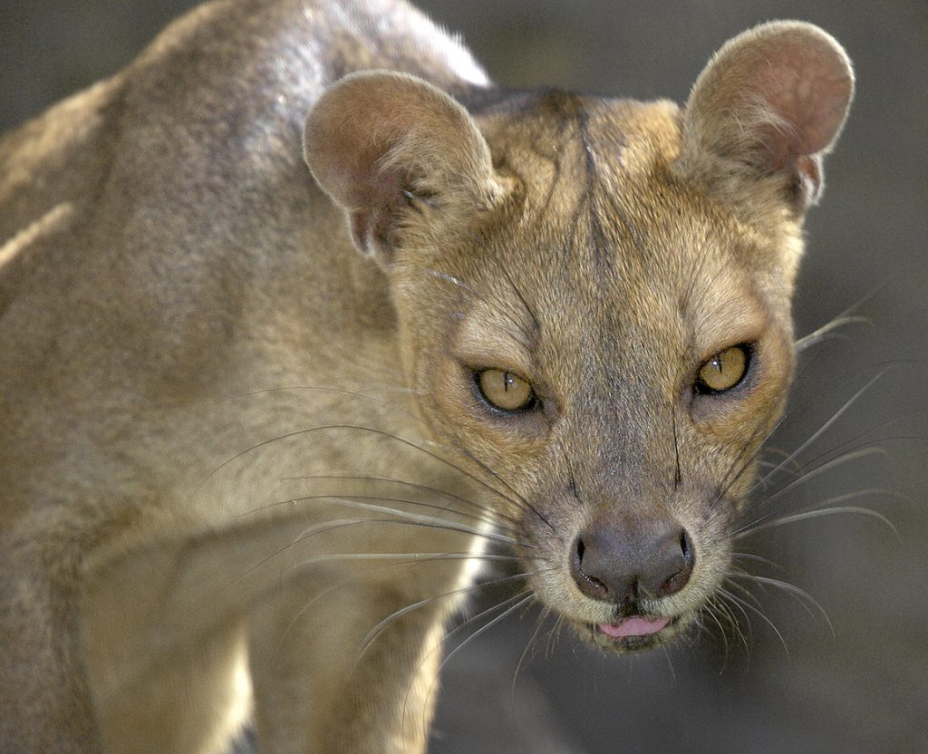 HEADER HERE Caption for Fossa inset image here