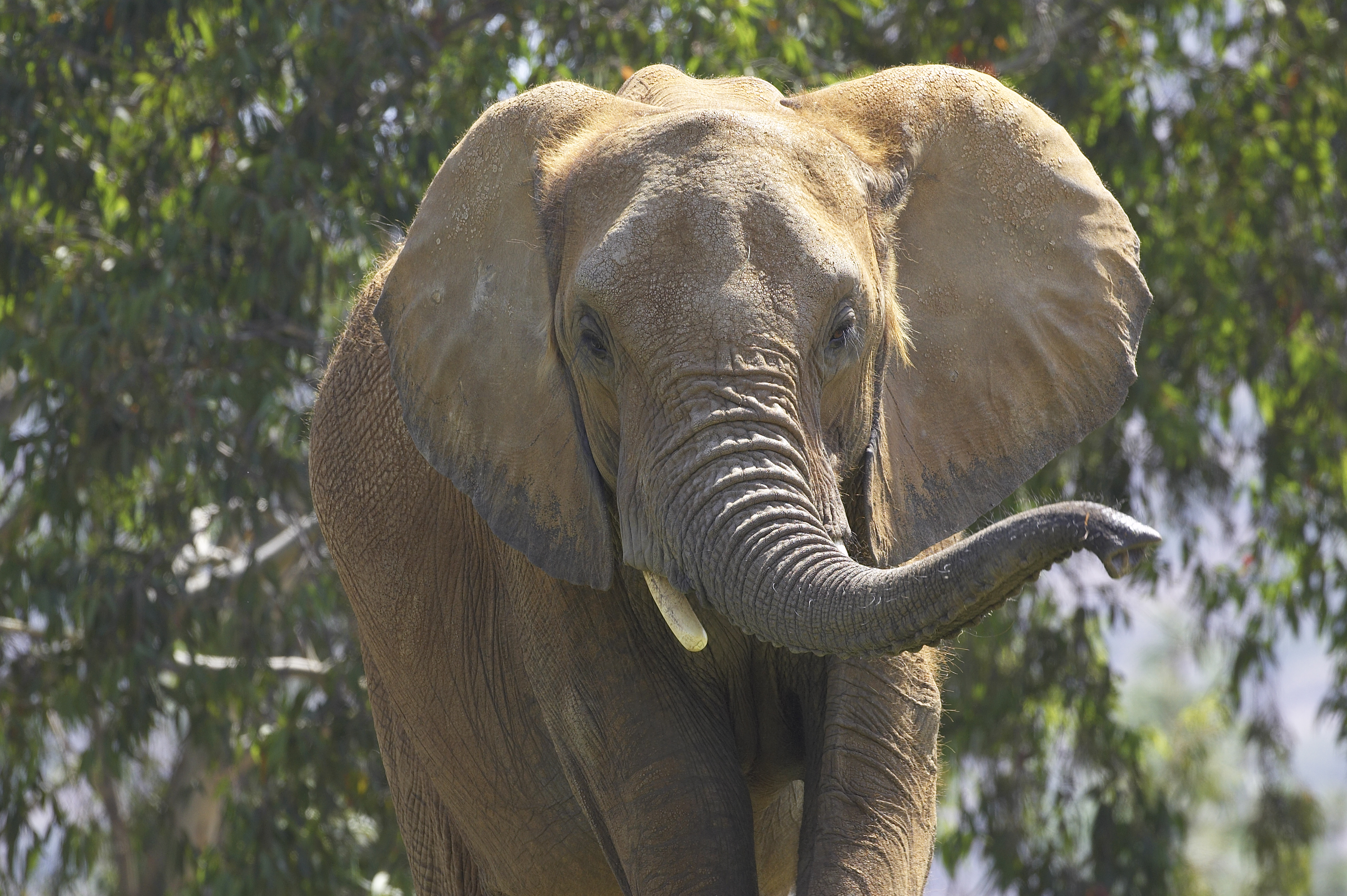 Best of 2016: San Diego Zoo Global's Conservation Highlights