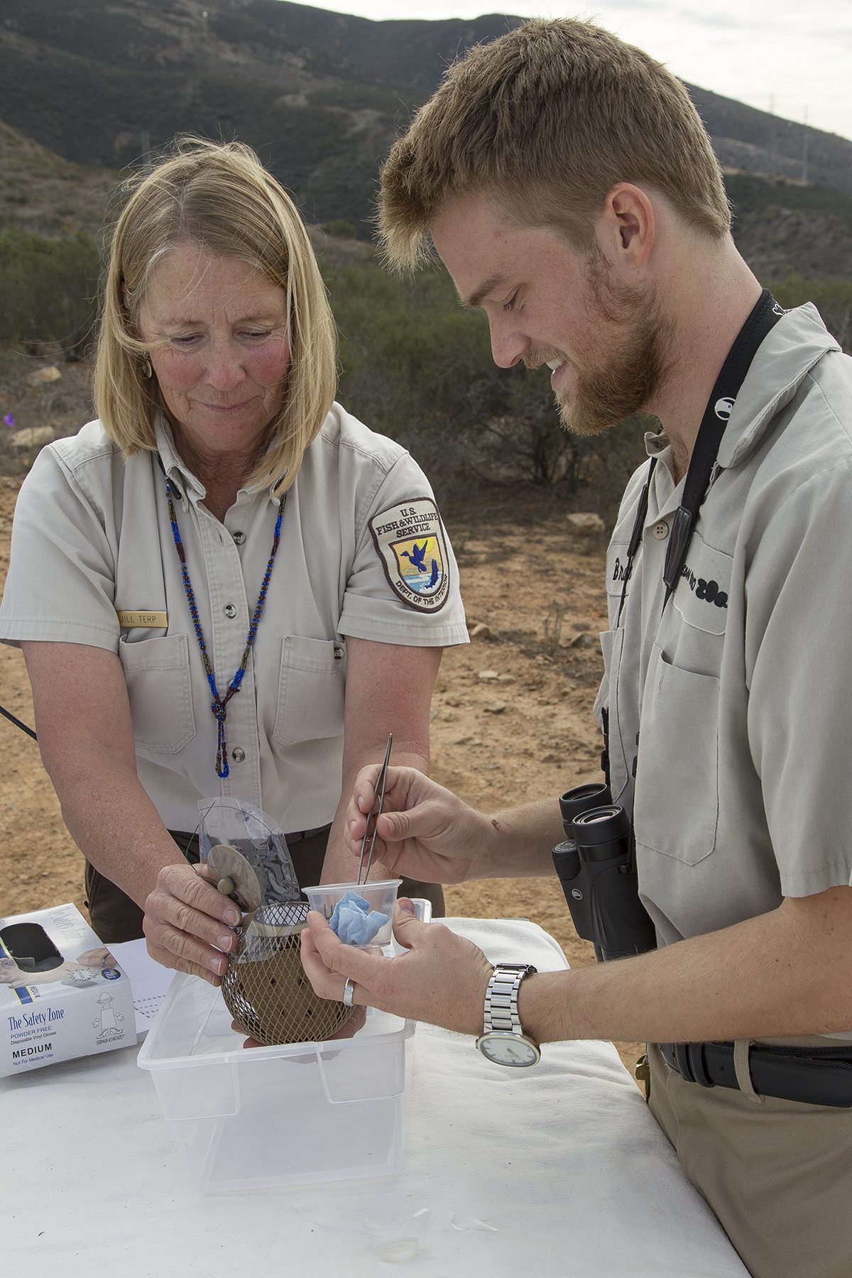Biologists Release Endangered California Butterfly Larvae into Native Habitat
