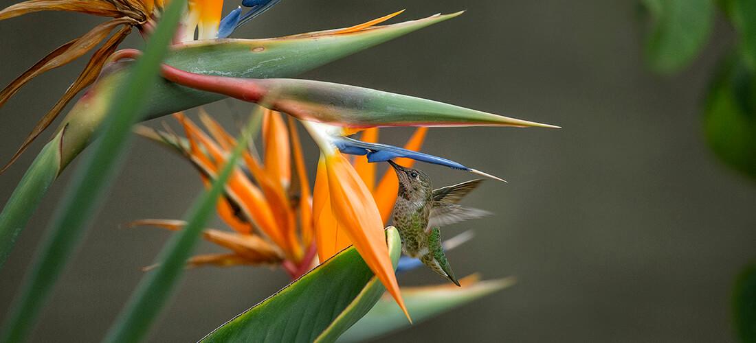 bird of paradise zoonooz