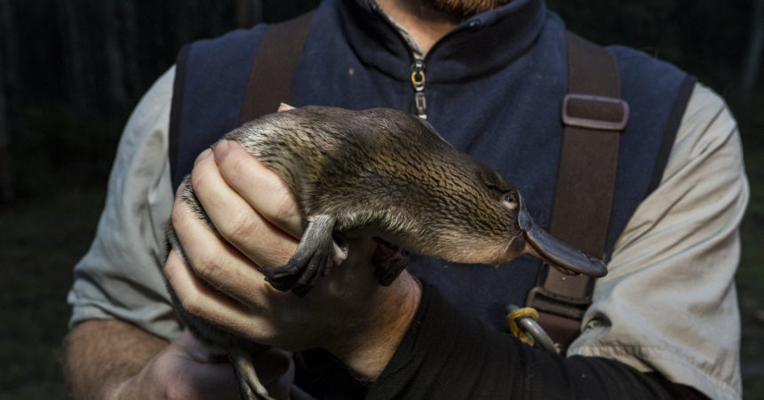 Platypus research