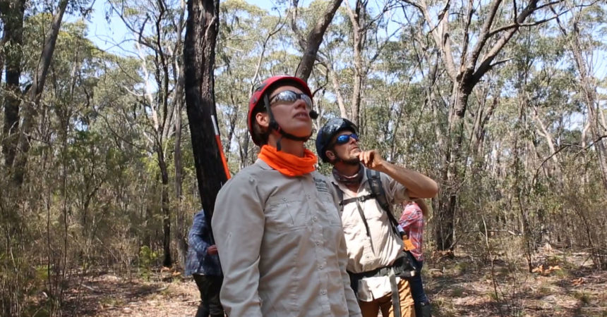 Researchers Overwhelmed by Wildfire Destruction in Blue Mountains