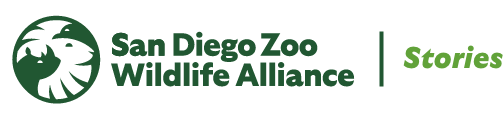 San Diego Zoo Wildlife Alliance Stories