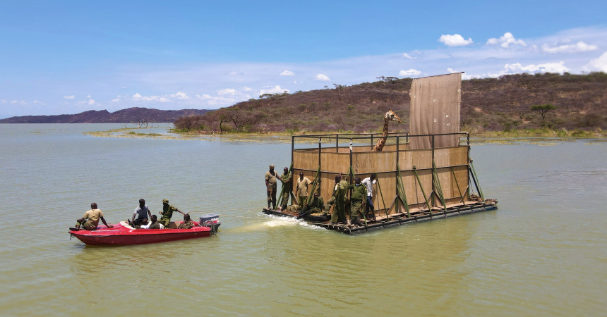 On Lake Baringo, floating to a new home