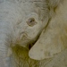 A Big Delivery: Elephant Calf Born at San Diego Zoo Safari Park